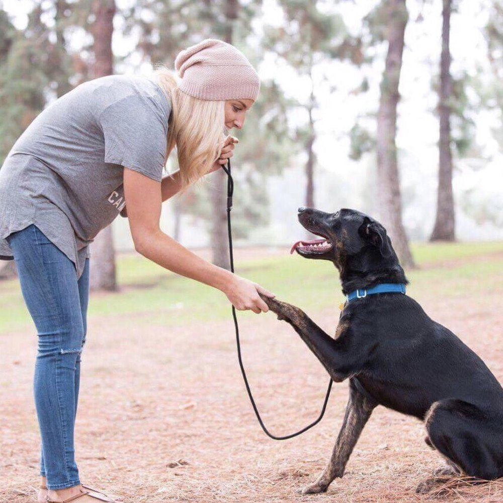 4Life Animal Rescue: 55 E Hoover Ave, Orange, CA