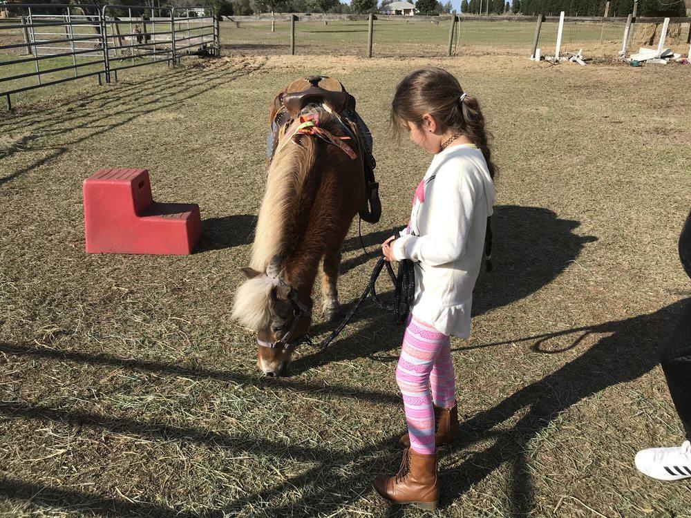 Party Animals Pony Rides: 17091 SE 67th Pl, Morriston, FL