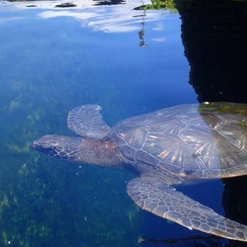 Maui Ocean Center 1594 Photos Amp 622 Reviews Aquariums