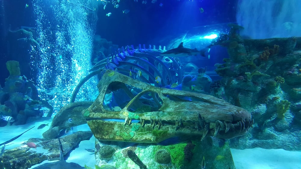 The Dinosaur Skeleton Makes For A Spectacular Setting Yelp