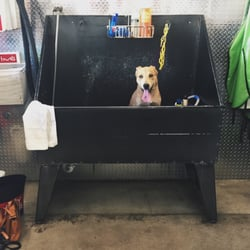 Dirty dog 13 photos 63 reviews pet groomers 3016 guadalupe photo of dirty dog austin tx united states wash station solutioingenieria Image collections