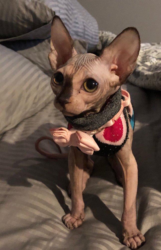Purrxotics - 48 Photos & 18 Reviews - Pet Adoption - 270 E
