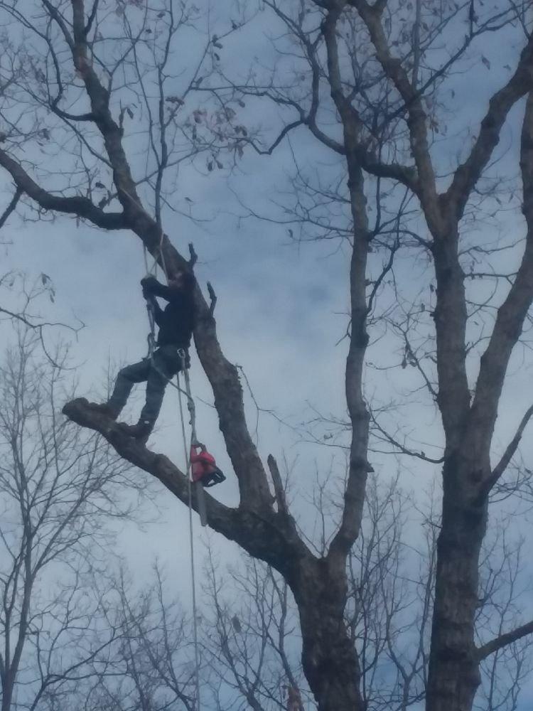 Luttrell's Tree Servive: Capon Bridge, WV