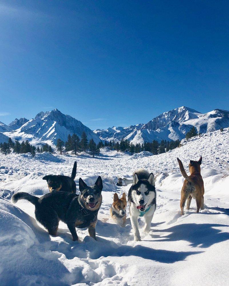 Sierra Dog Ventures: Mammoth Lakes, CA