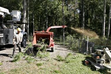 Tree Masters Tree Service: 12933 Lussier Ln, Spring Hill, FL