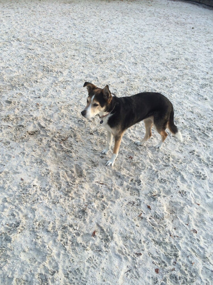 Dog Parks In Canton Baltimore