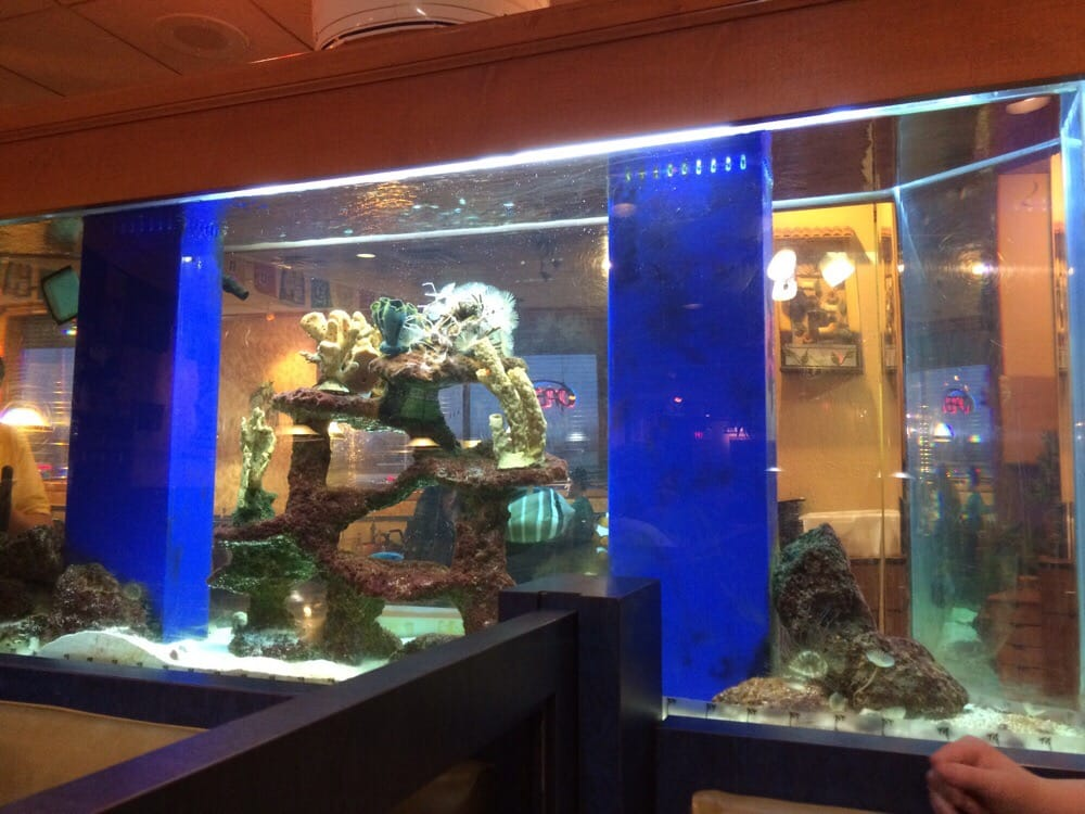 Fish tanks for entertaining your monsters yelp for Fish tank cleaning service near me