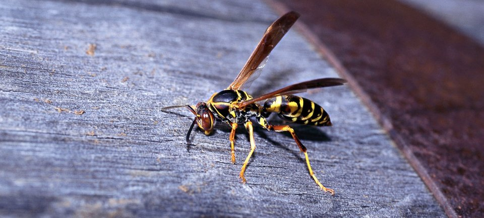 Bugs and Beyond Pest & Wildlife Control: Longmont, CO