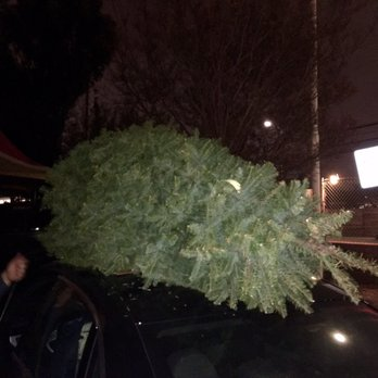 Photo of Delancey Street Christmas Tree Lot - Santa Monica, CA, United  States. - Delancey Street Christmas Tree Lot - 37 Reviews - Christmas Trees