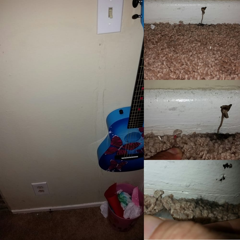 Mold In Apartment: Black Mold & Mushrooms Growing Out Of The Carpet