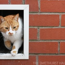 The Smethurst Hall Cat Hotel - Request a Quote - 15 Photos