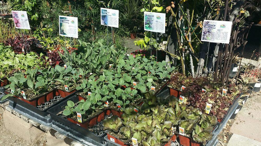Bellefontaine Nursery 80 Photos 56 Reviews Nurseries Gardening 838 S Fair Oaks Ave Pasadena Ca Phone Number Yelp