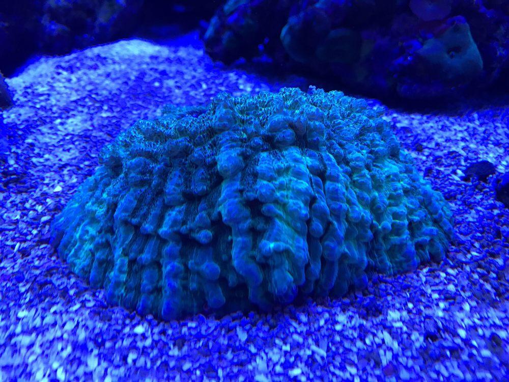 Shark Reef: 923 W Prince Rd, Tucson, AZ