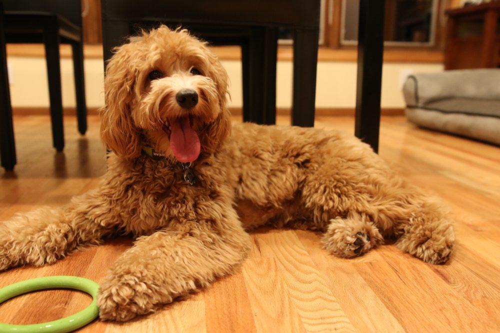 Dava's Doggy Spa