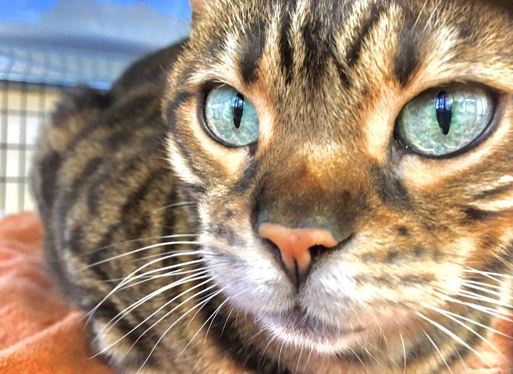 Peninsula Humane Society & SPCA - 184 Photos & 252 Reviews