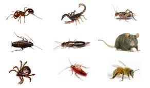 Dean's Pest Solutions: 2380 Denise Dr, Clio, MI