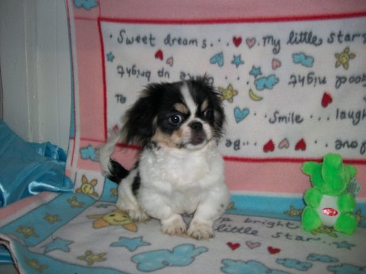 Mainely Puppies Plus 280 Park St South Paris Me Pet Shops Mapquest