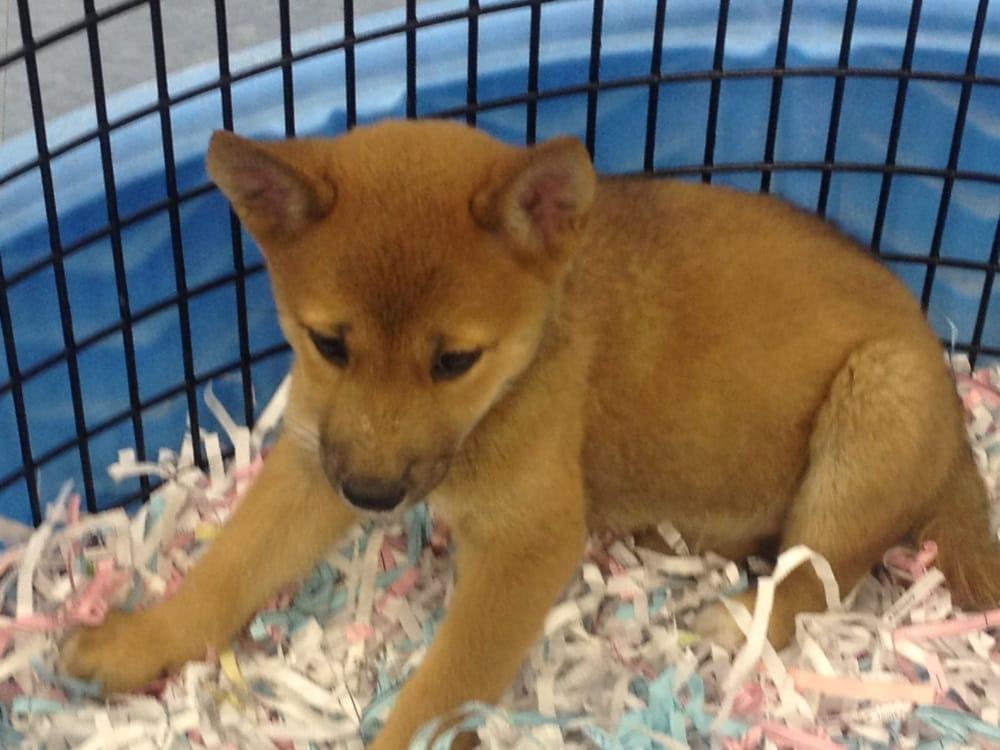 Puppies Galore & More: 8102 Blanding Blvd, Jacksonville, FL