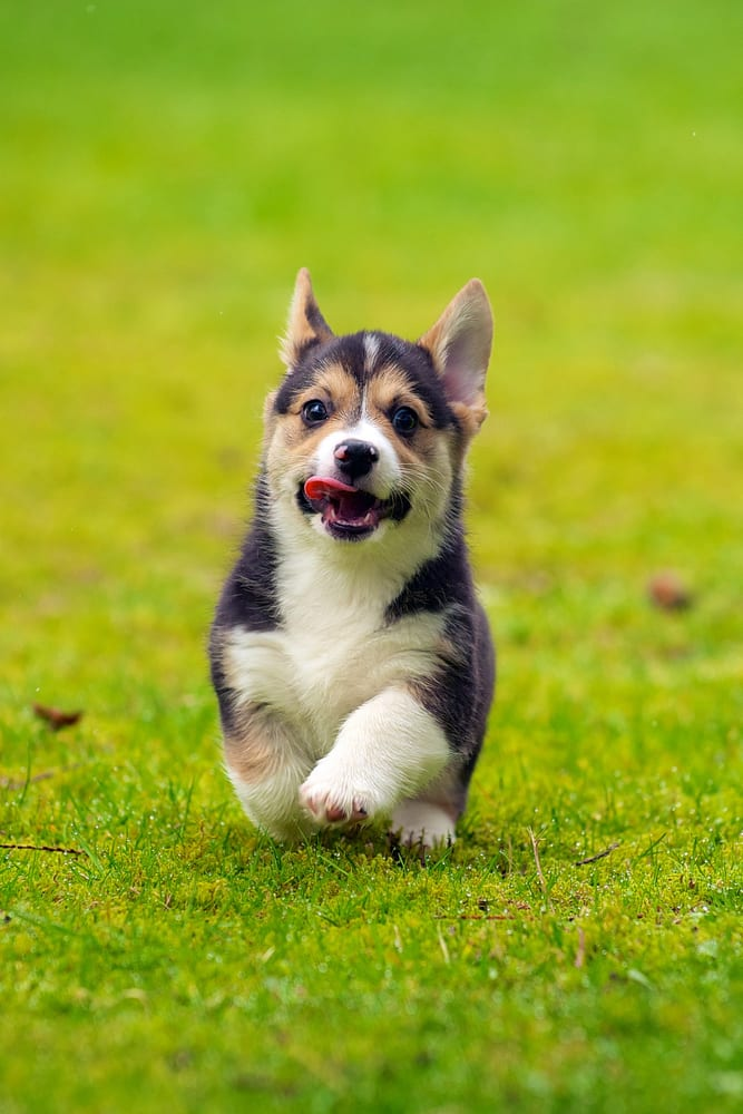 Pet Domestic Pet Waste Removal: 1525 Lincoln Way, Mclean, VA