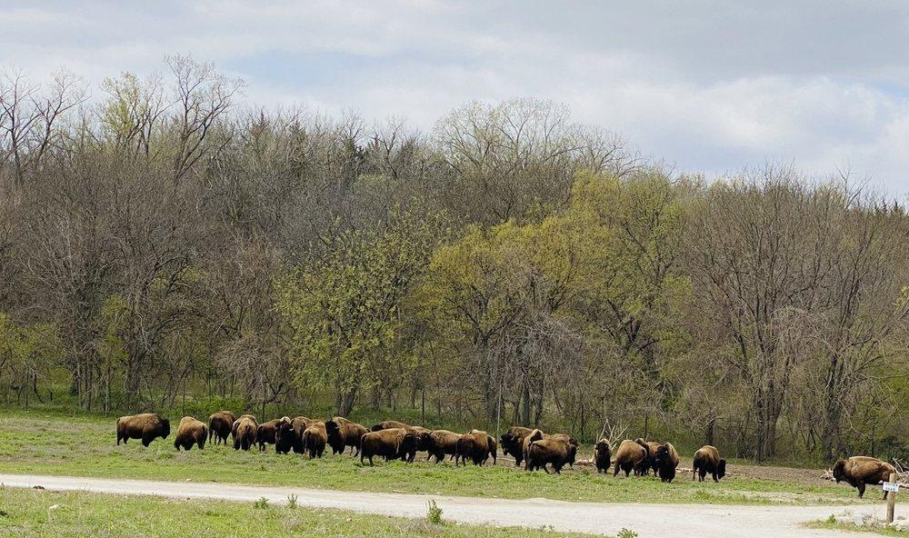 Lee G. Simmons Conservation Park & Wildlife Safari: 16406 292nd St, Ashland, NE