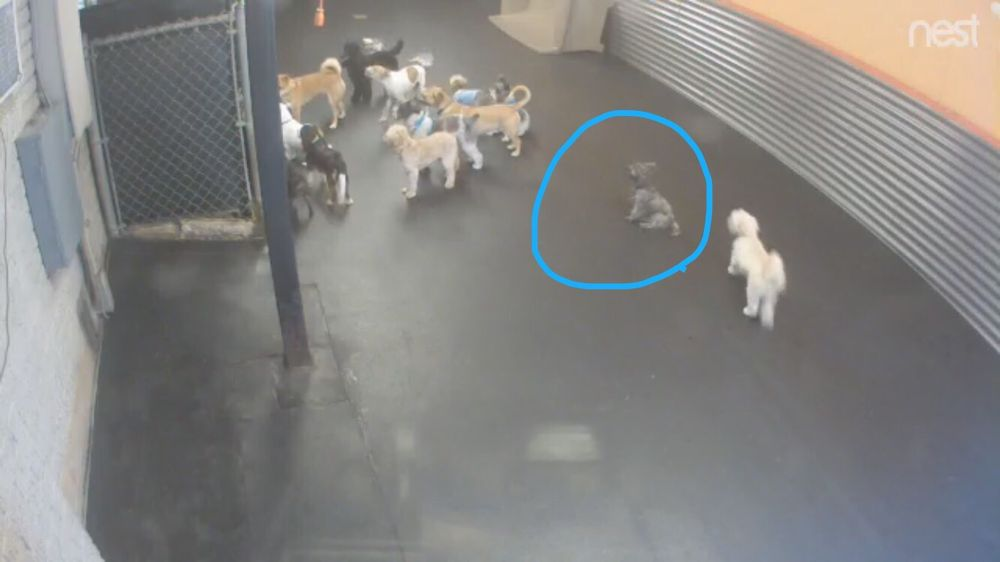 Photo Of The Pooch Patio   Dallas, TX, United States. Live Camera Feed