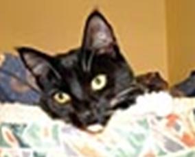 Leesport Pet Resort: 221 Hafer Dr, Leesport, PA