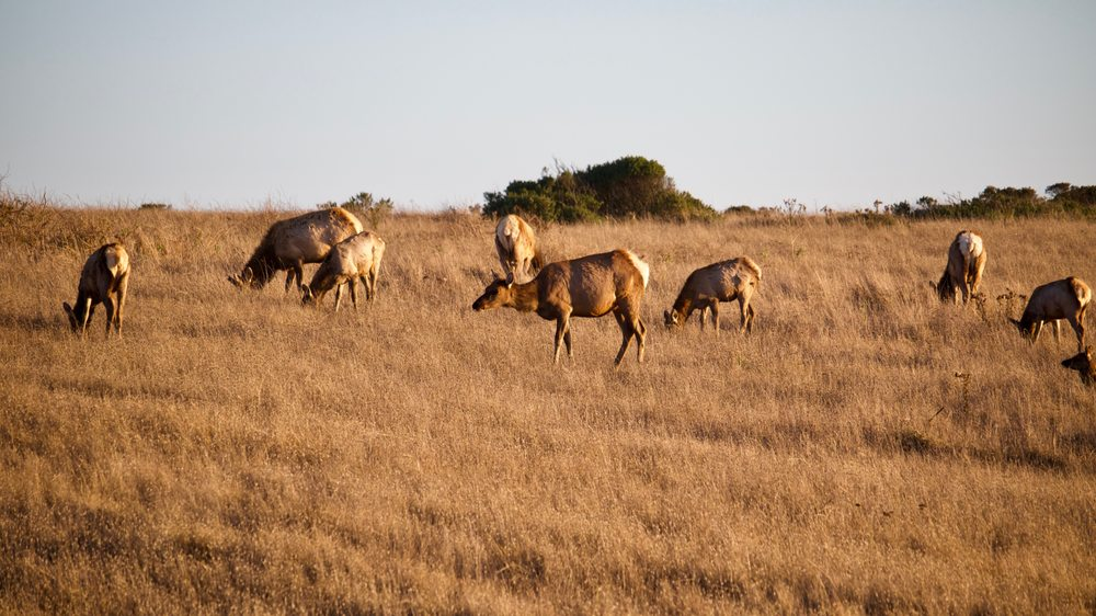 Tomales Point Trail - Tule Elk Preserve: Pierce Point Rd, Inverness, CA