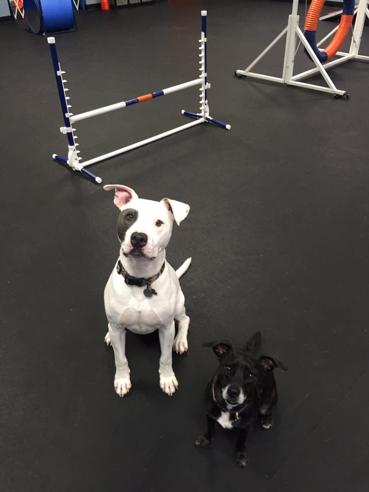 Rocco and andy s first private gym experience yelp