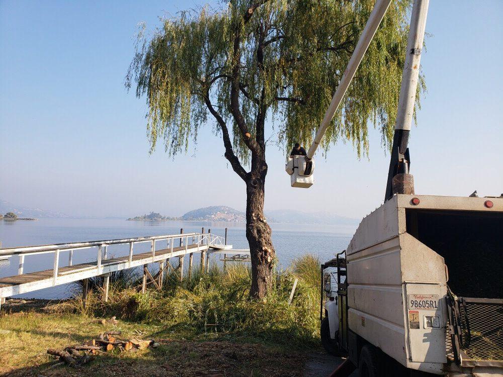 A Nichols Tree Service: 15375 Bottlerock Rd, Cobb, CA