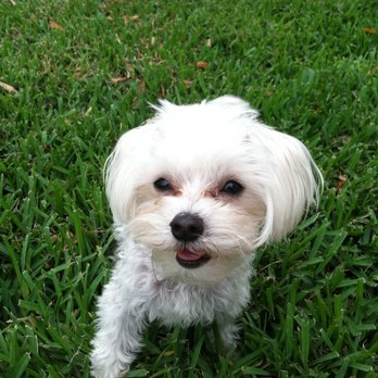 Veterinary Healthcare Associates - 33 Photos & 20 Reviews ...