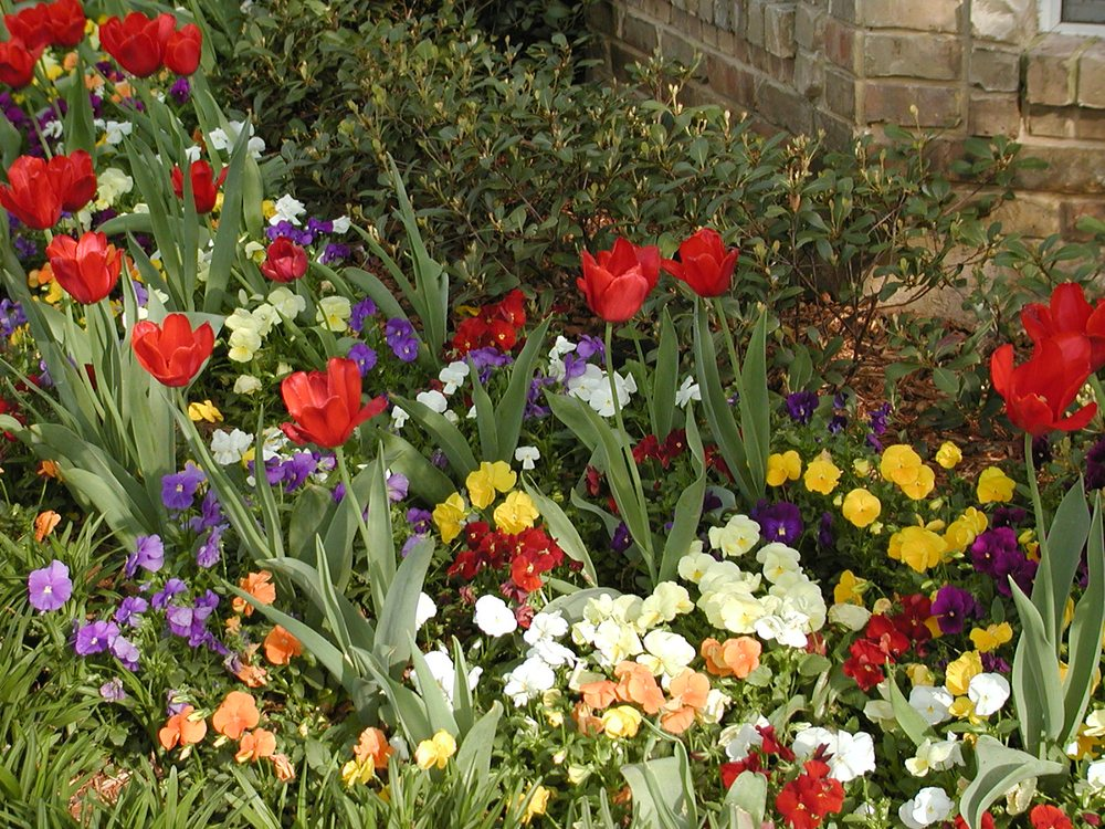 Austin Gardens Landscape Services: Corinth, TX