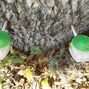 ... Photo of Canopy Tree Service - San Antonio TX United States. Tree Nutrition ... & Canopy Tree Service - 14 Photos u0026 15 Reviews - Tree Services ...