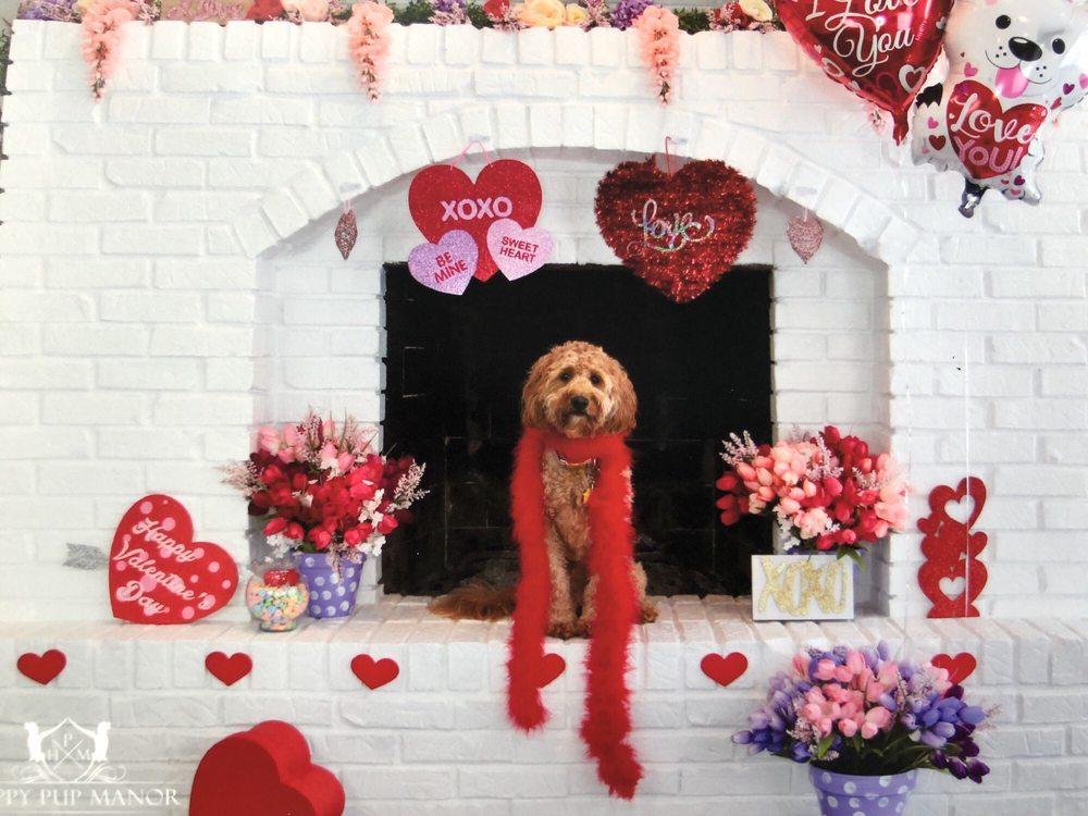 Happy Pup Manor: Long Grove, IL