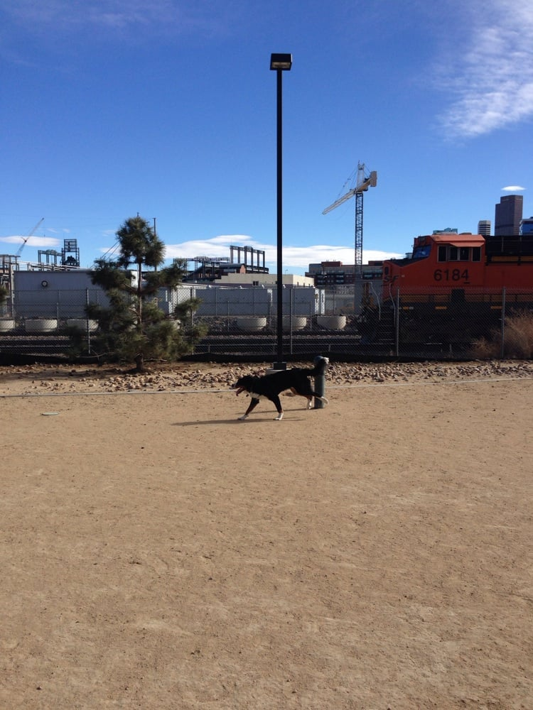 Dog Park For Small Dogs Denver