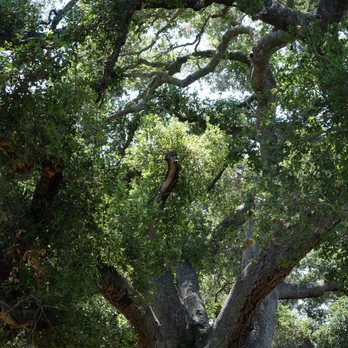 photo of santa barbara botanic garden santa barbara ca united states - Santa Barbara Botanic Garden