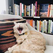 E Shaver Bookseller - 30 Photos & 36 Reviews - Bookstores - 326 Bull