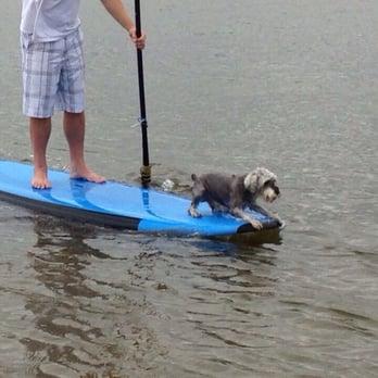 Boarding Dogs In Pensacola Fl