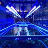 Blureef Aquarium: 2198 Flatbush Ave, Brooklyn, NY