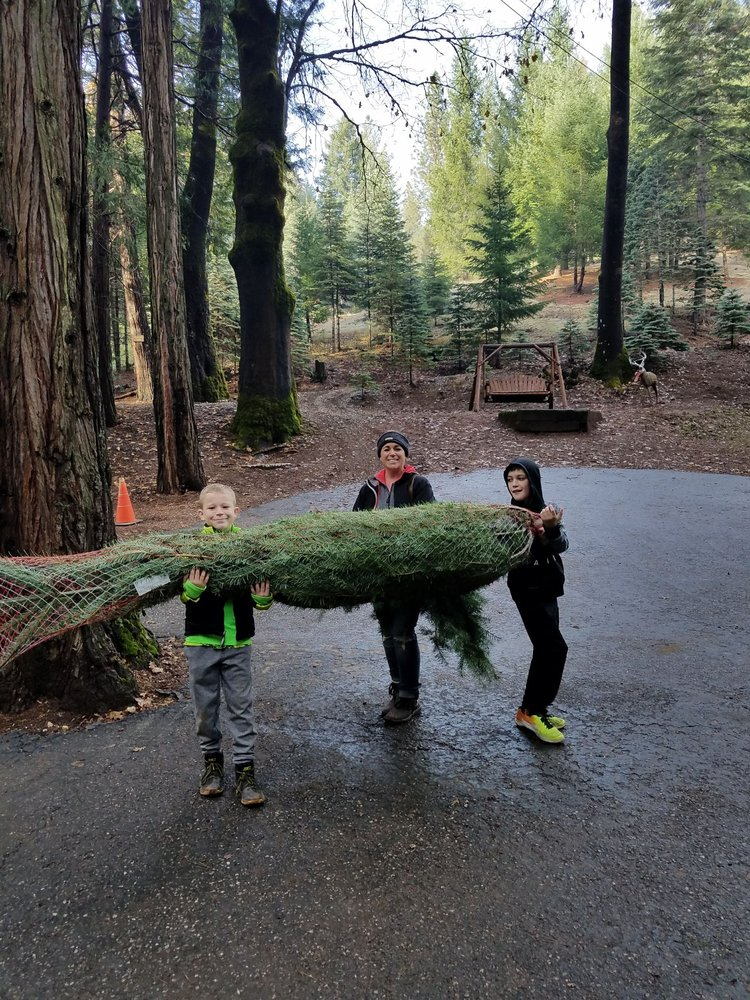 Little Bear Tree Farm: 960 Meadow Rd, Alta, CA