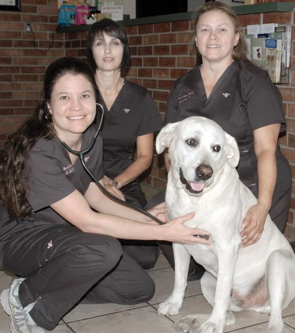 Sewell Animal Hospital: 638 S Main St, McAlester, OK
