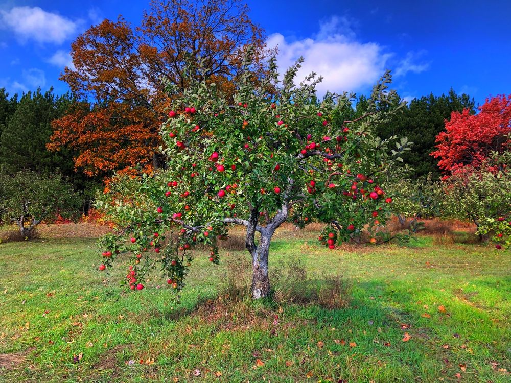 Sunset Valley Orchard and The Apple Branch: 86520 Valley Rd, Bayfield, WI