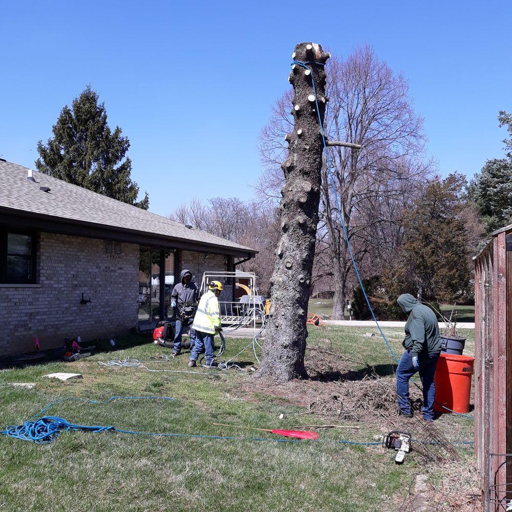 Nicholas Tree Care: 3212 Poplar Dr, Island Lake, IL