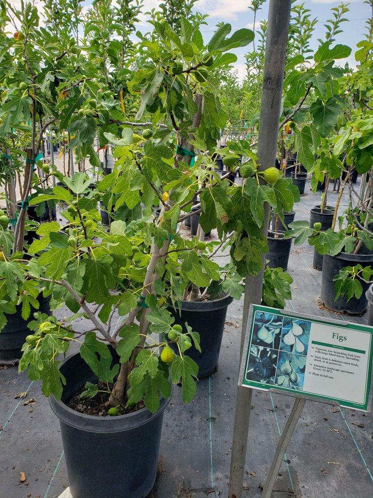 Sierra Vista Growers: 2800 Hwy 28, Anthony, NM