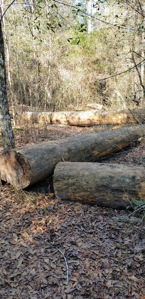 Sam Houston National Forest: 394 Fm 1375 Rd, New Waverly, TX