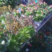 Photo Of Mt Diablo Nursery Garden Lafayette Ca United States