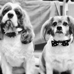 Bare bones dog wash 34 photos 20 reviews pet groomers 3365 e photo of bare bones dog wash eugene or united states solutioingenieria Image collections