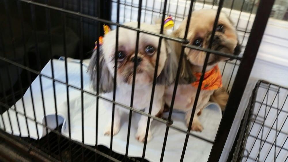 Anne's Doggy Spa: 1200 Columbia Ctr, Columbia, IL