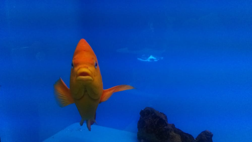 Fins friends closed 23 reviews local fish stores for Fish stores in arizona
