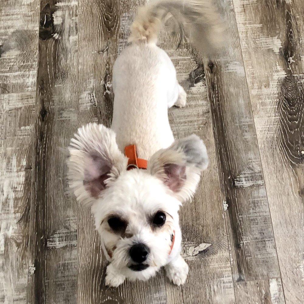 Feibulous Dog Grooming: 2118 Manatee Ave E, Bradenton, FL