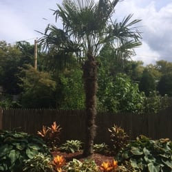 Photo Of Long Island Palms Tropicals Melville Ny United States Cold